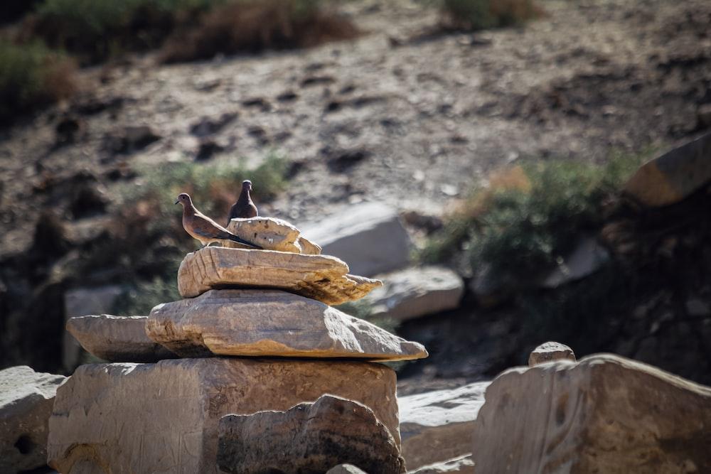 brown bird on brown wooden log during daytime