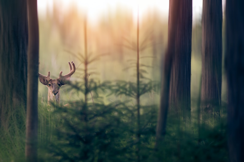 deer in forest during daytime