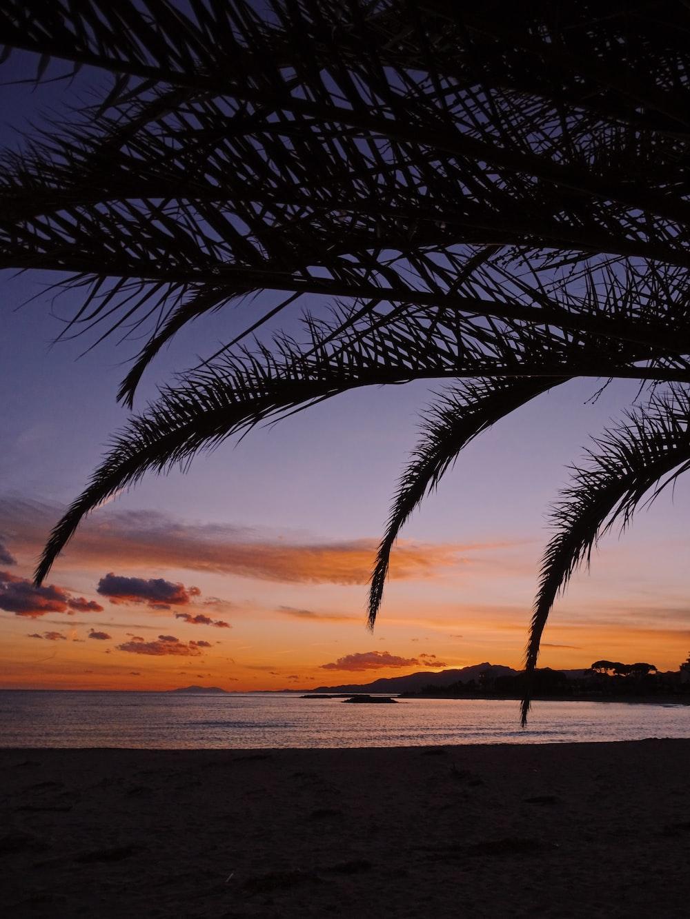 palm tree near sea during sunset