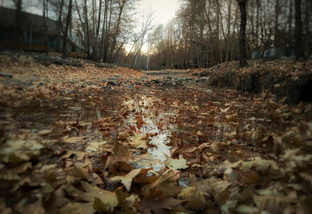 brown dried leaves on ground during daytime