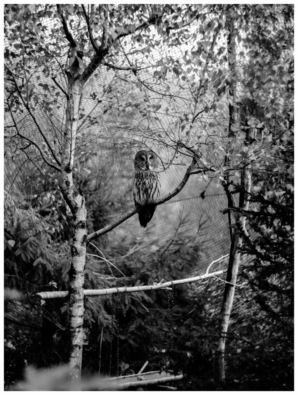grayscale photo of owl on tree branch