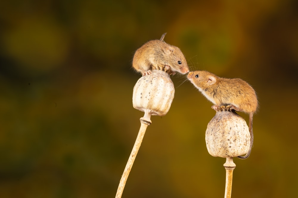 brown rodent on brown wooden stick