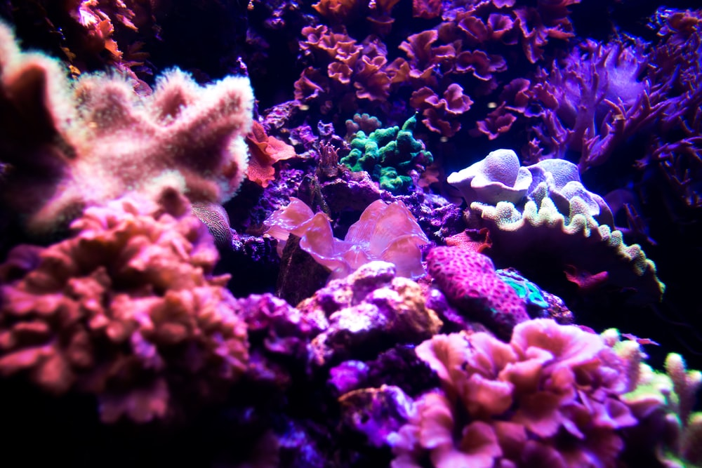 purple and gray coral reef