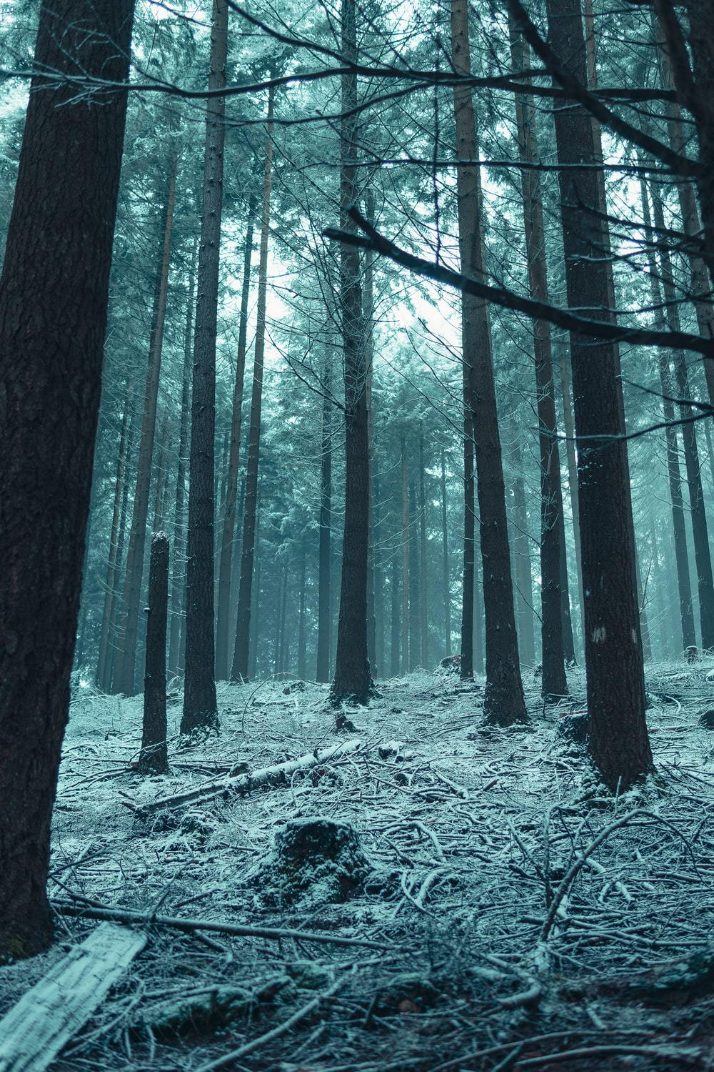 grayscale photo of trees on snow covered ground
