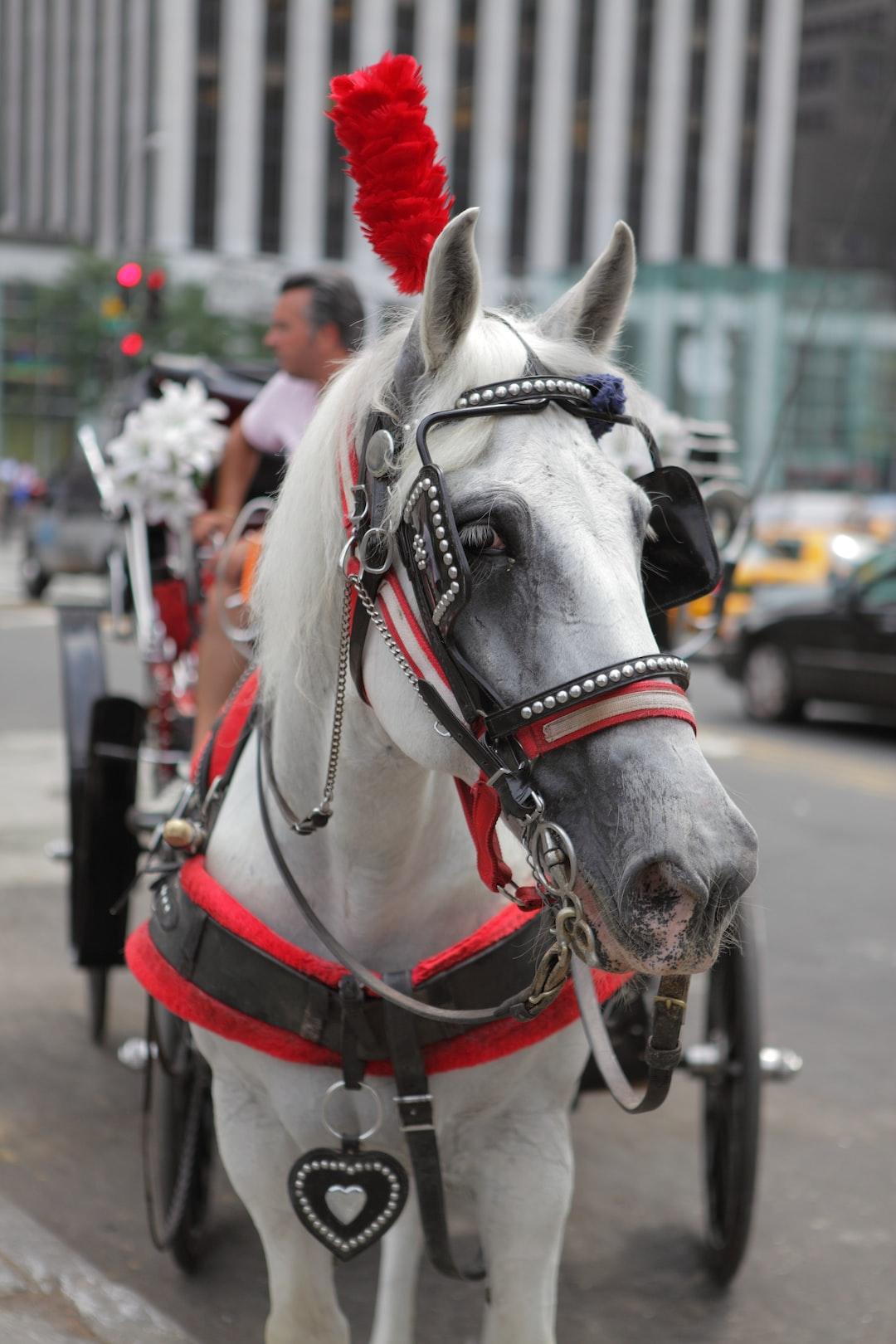 Cart horse.