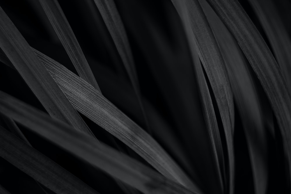 grayscale photo of plant leaf