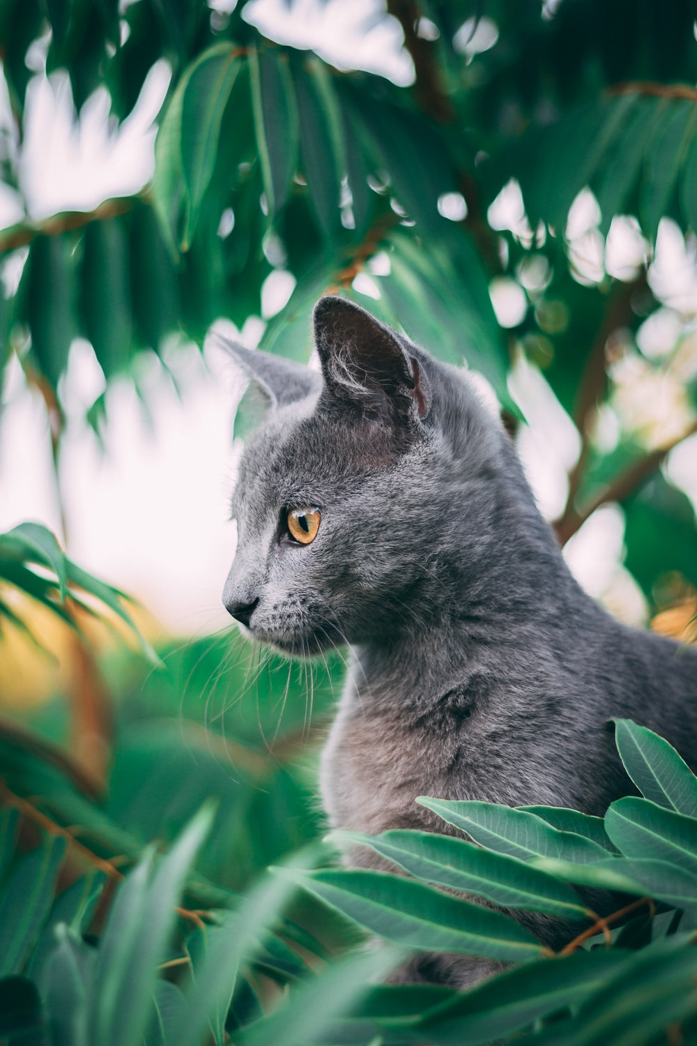 russian blue cat on green grass during daytime