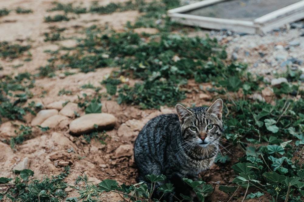 brown tabby cat on ground