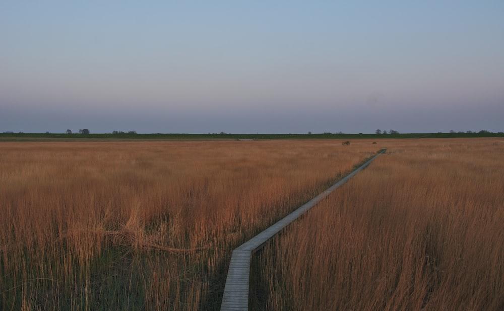 white wooden bridge on brown grass field during daytime