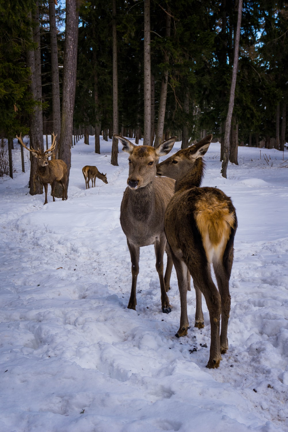 herd of deer on snow covered ground during daytime