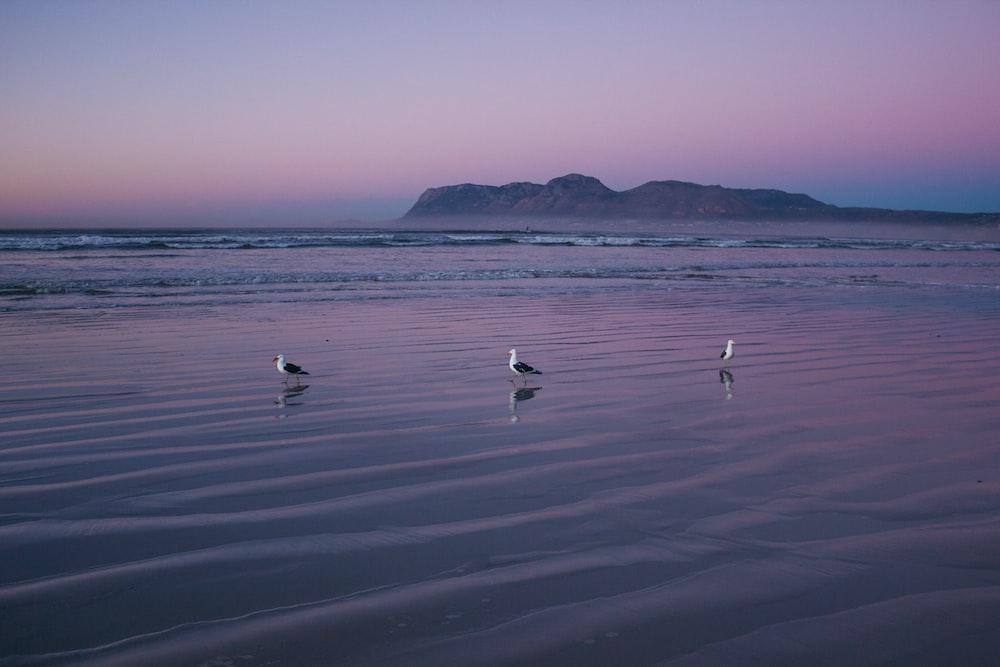 birds on beach during daytime