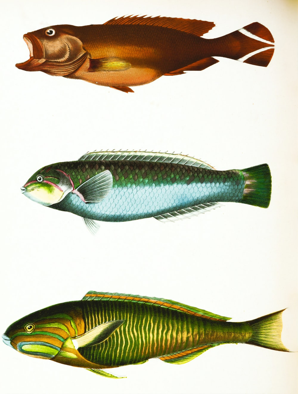 3 yellow and silver fishes