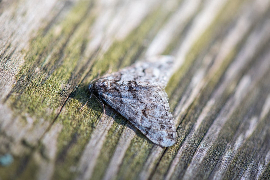 moth sitting on a piece of wood