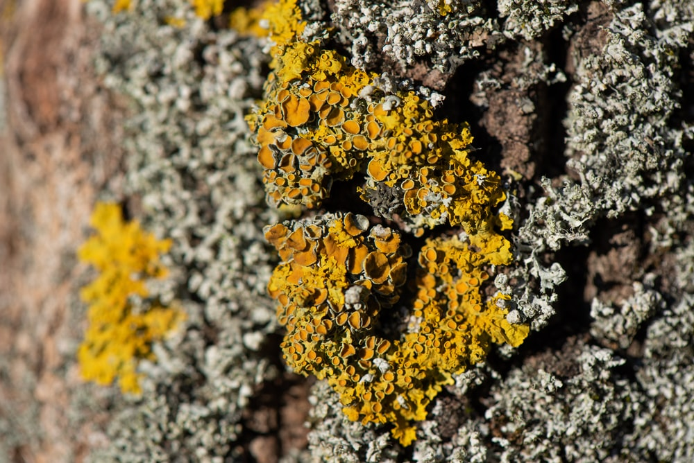 yellow flowers on brown tree trunk