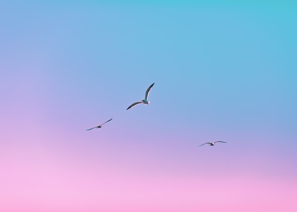 silhouette of birds flying during daytime