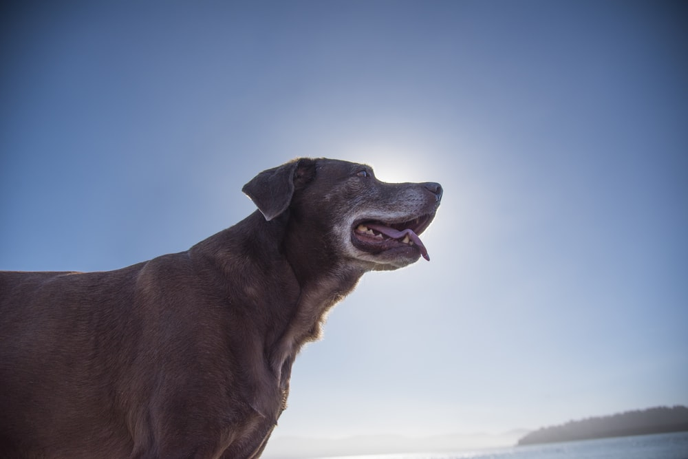 brown short coated dog under blue sky during daytime