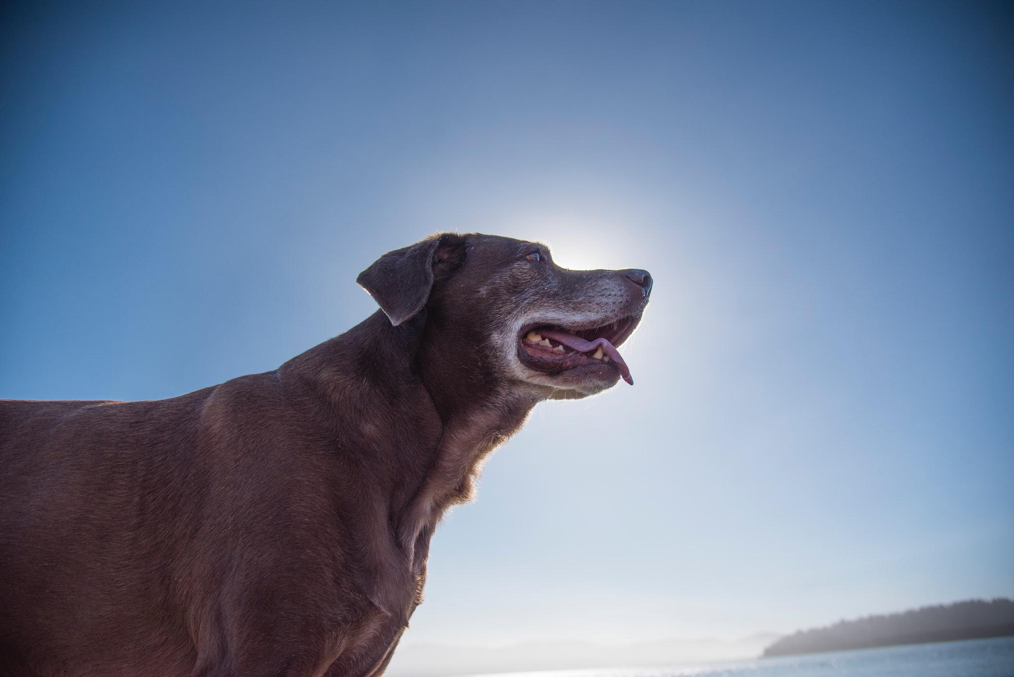 Migliorare la vita quotidiana di un cane anziano