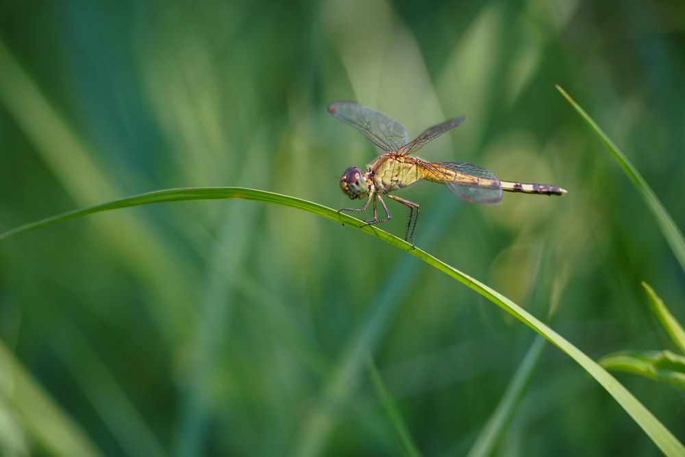 brown and black dragonfly on green leaf during daytime