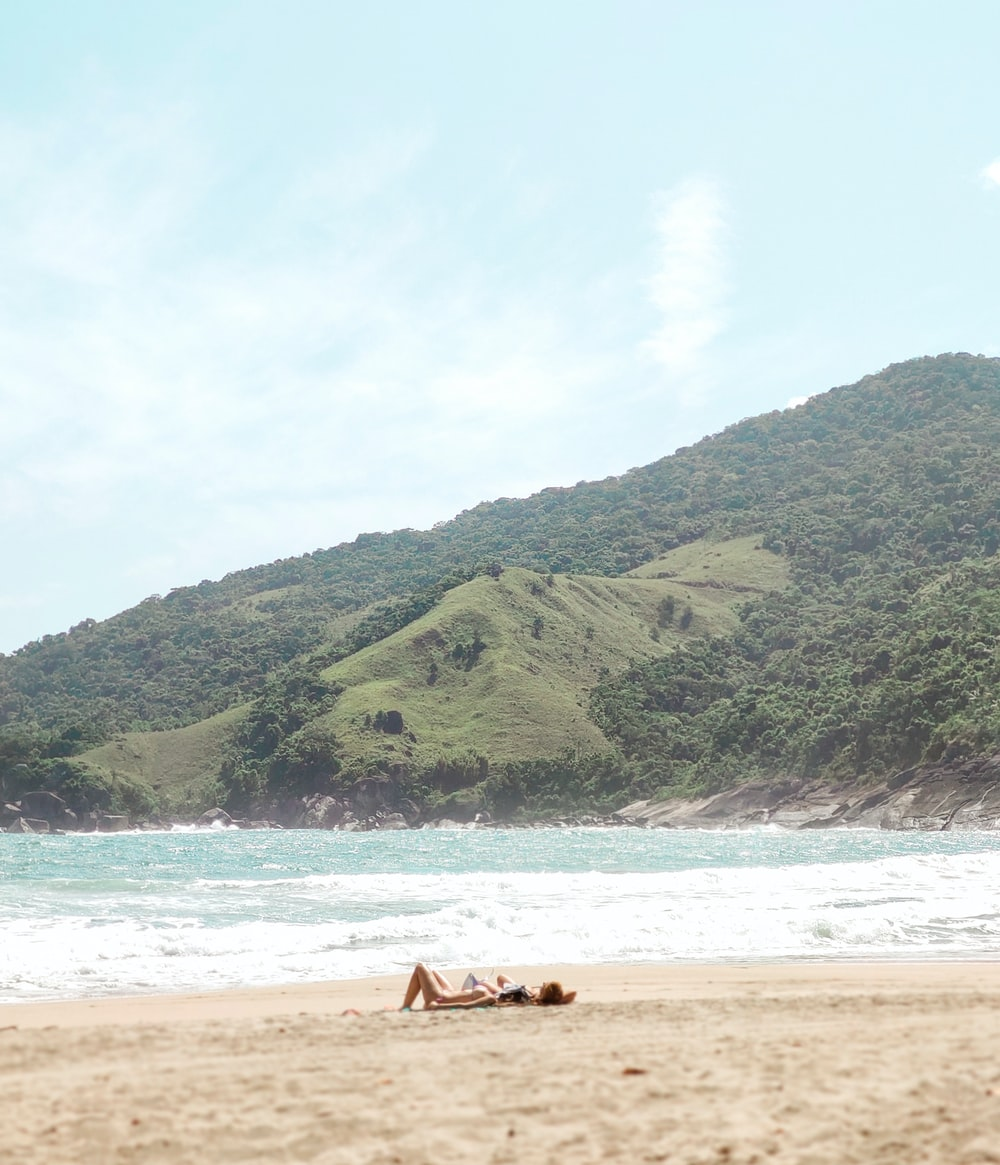 brown horse on seashore during daytime
