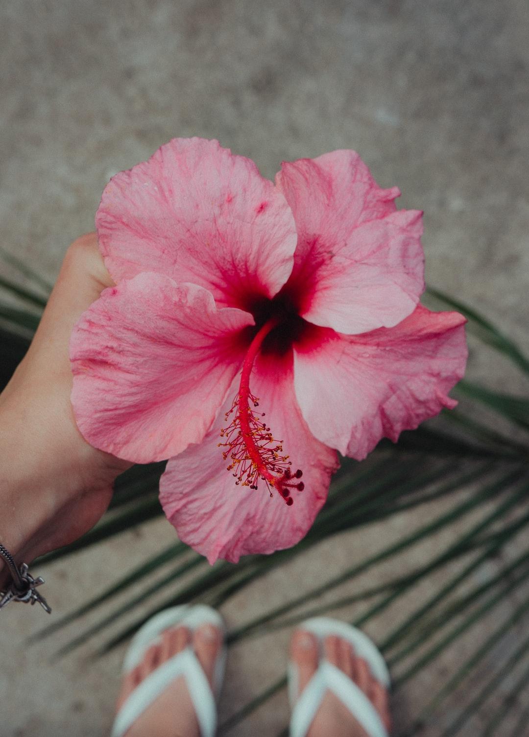 Girl holding hibiscus flower