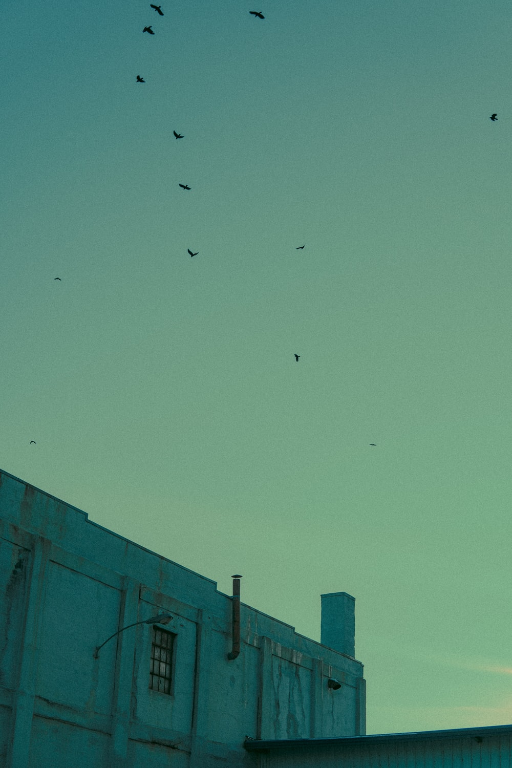 flock of birds flying over the building during daytime