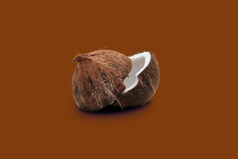 brown and white bird nest