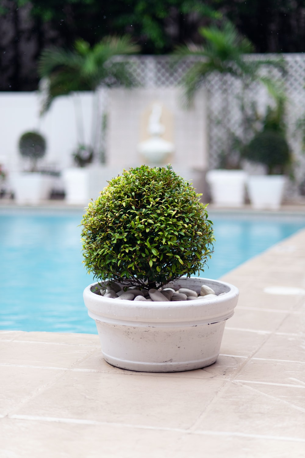 green plant on white ceramic pot