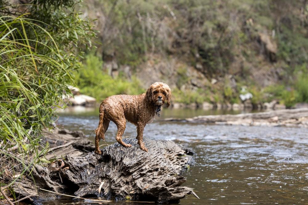 brown short coated dog on brown log on river during daytime
