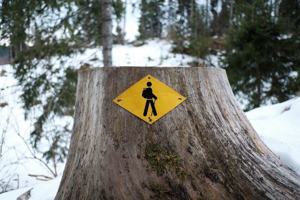 yellow and black arrow sign on brown tree