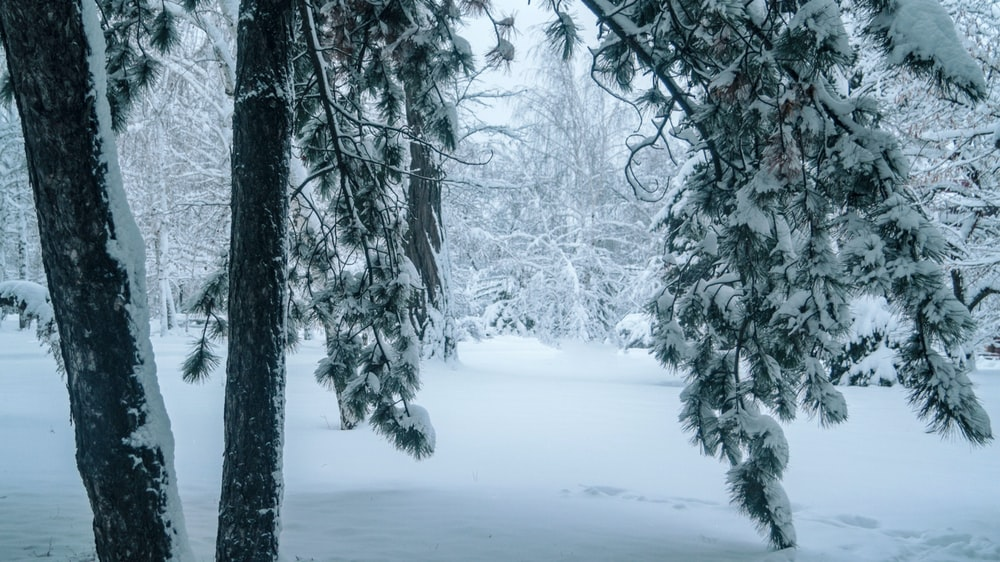 snow covered trees on snow covered ground during daytime