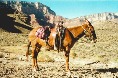 brown horse on brown field during daytime grand canyon zoom background
