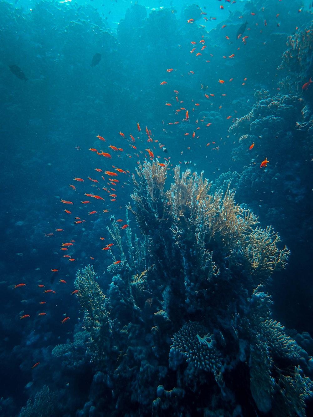 brown coral reef under water