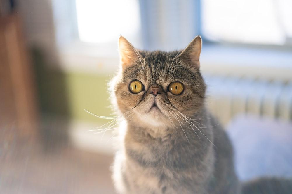 brown and white cat in tilt shift lens