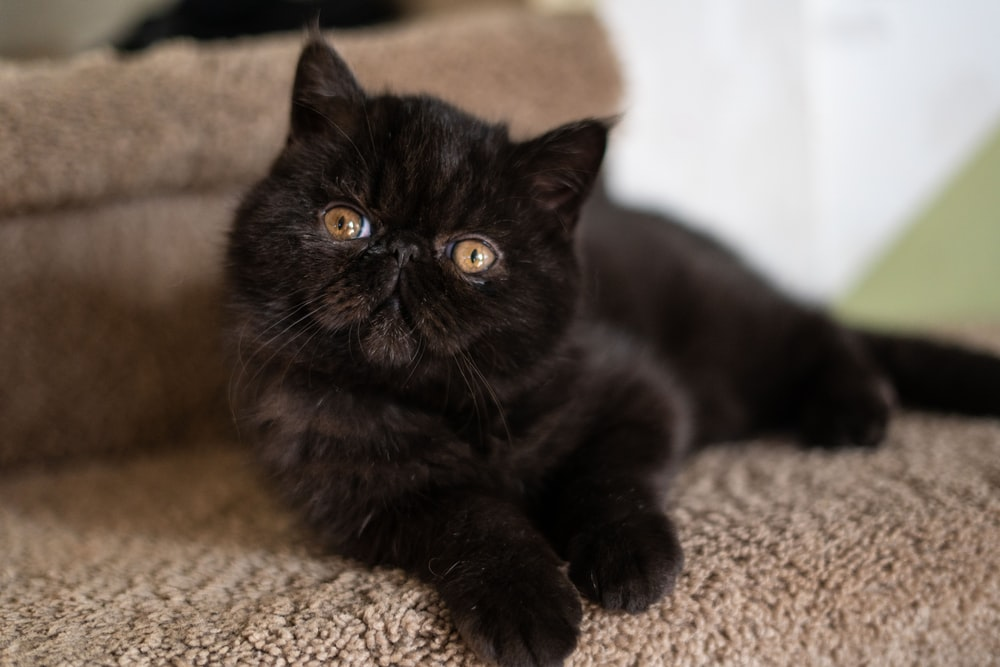 Black Kitten Pictures Download Free Images On Unsplash
