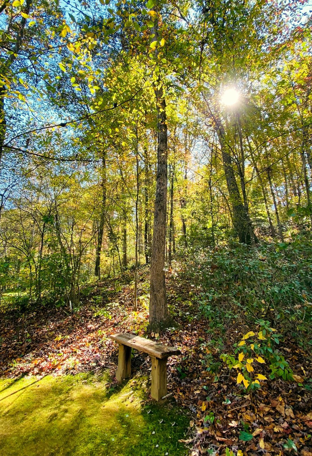 Fall trail scenery