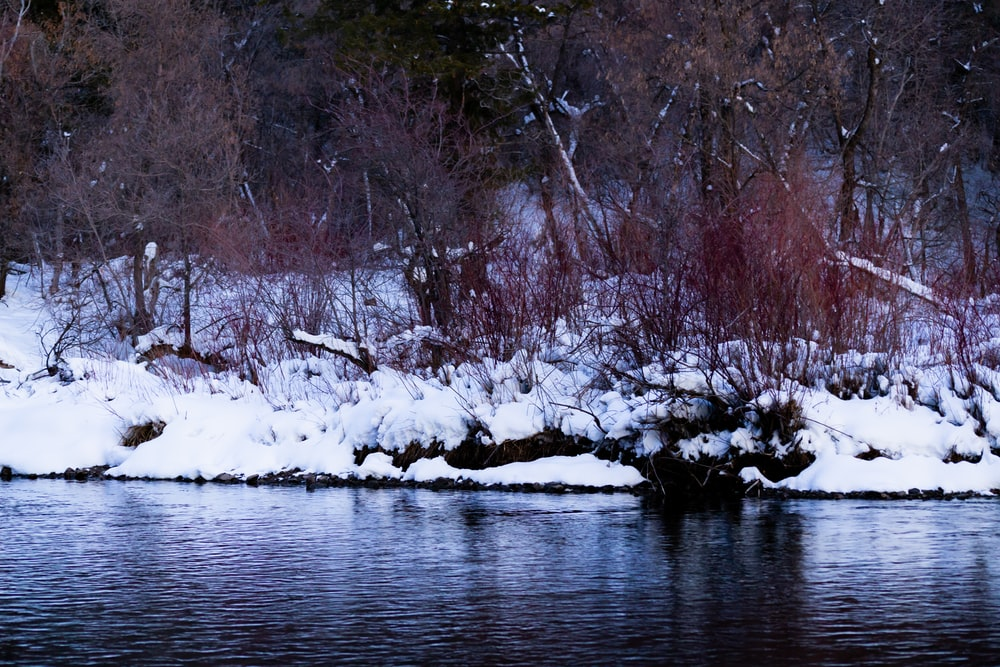 snow covered trees on river during daytime