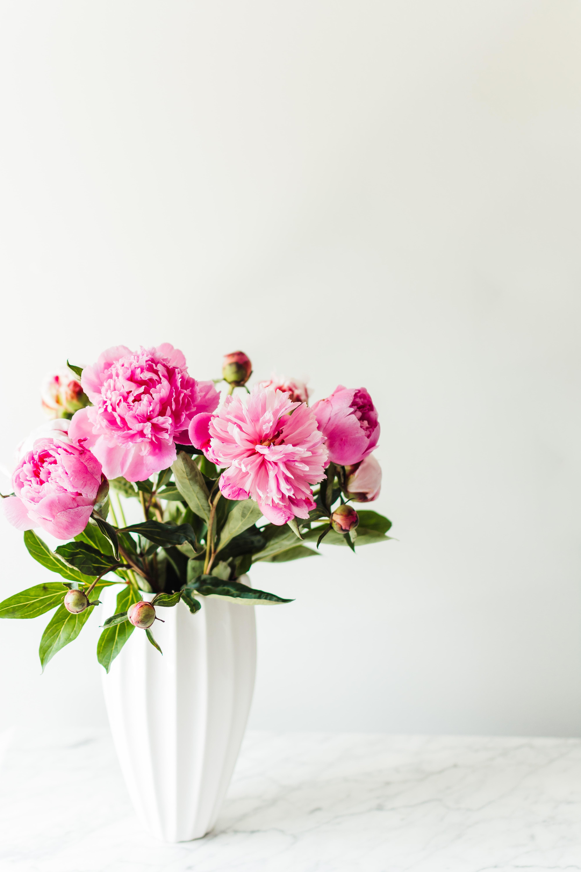 Pink Flowers In White Ceramic Vase Photo Free Plant Image On Unsplash