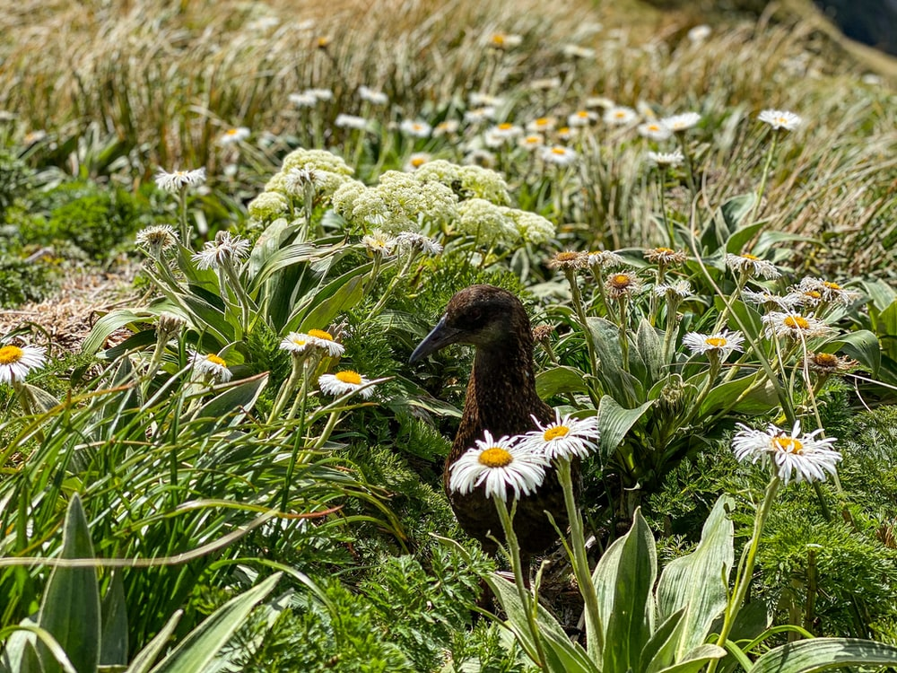brown bird on white daisy flower field during daytime
