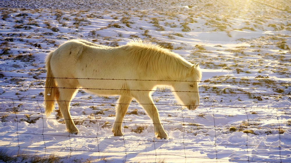 white horse on snow covered ground during daytime
