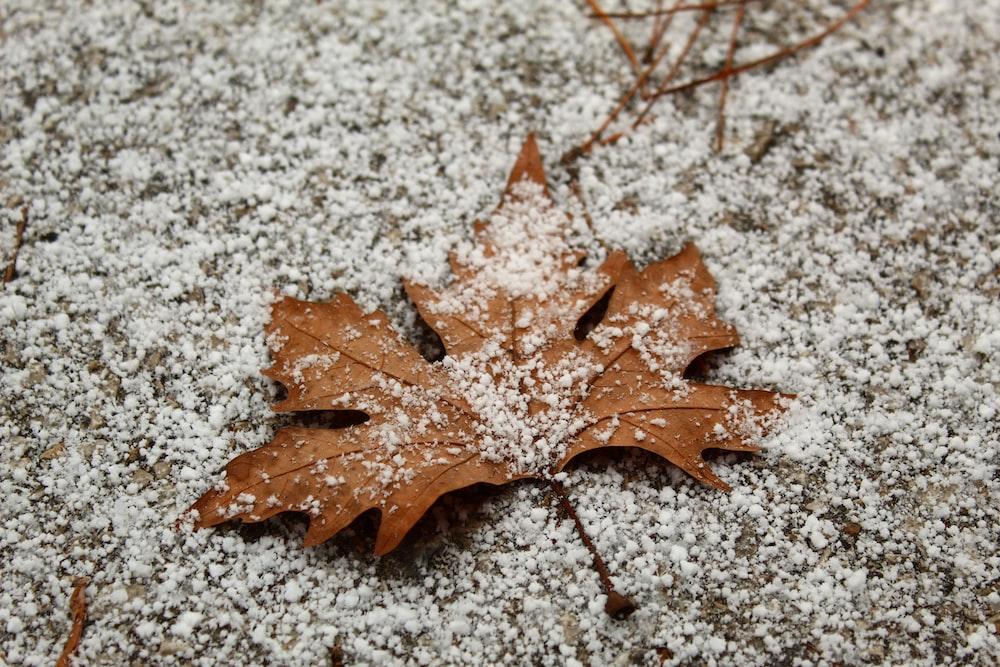brown maple leaf on white snow