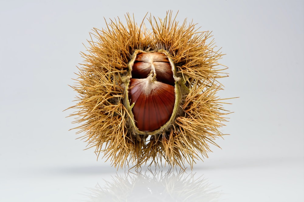 brown round fruit on white table