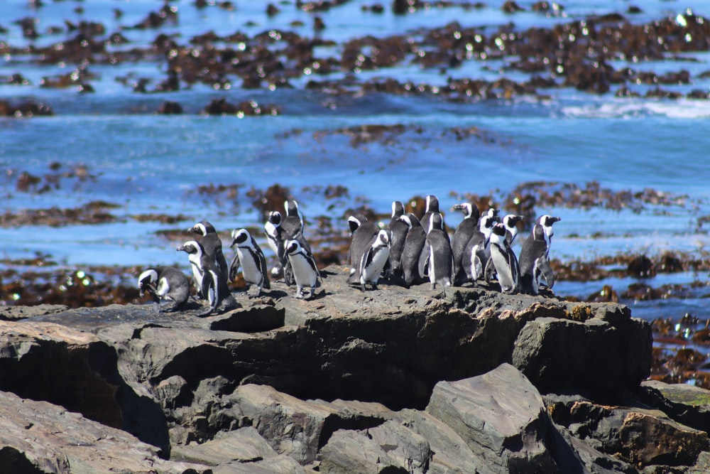 penguins on rock near body of water during daytime