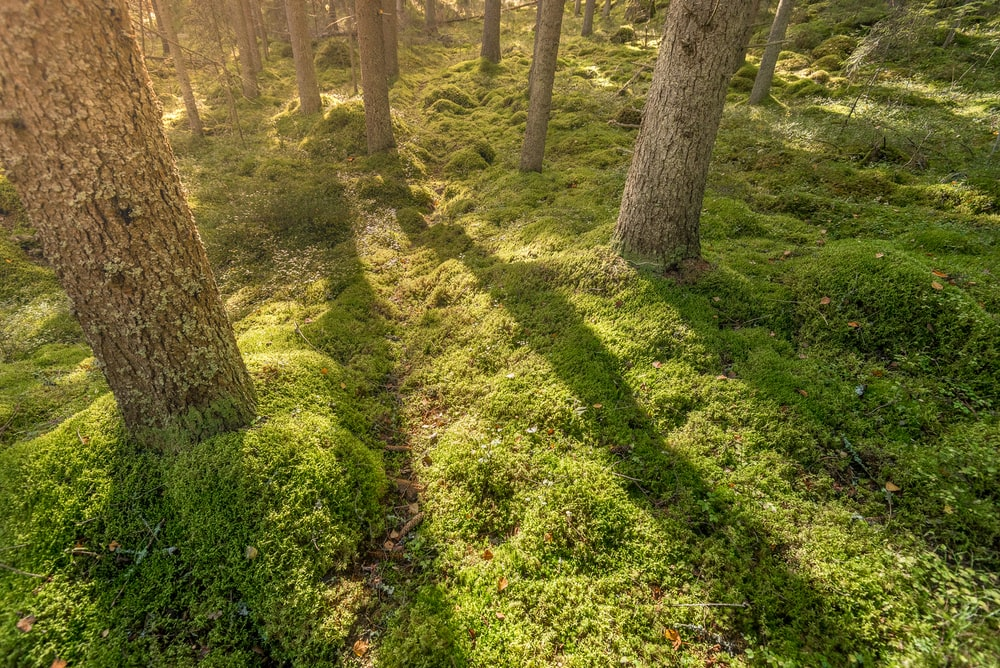 green grass and brown tree trunk