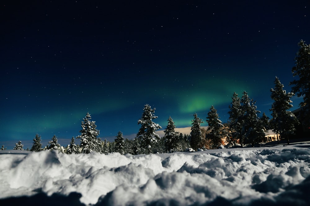 green trees covered with snow under blue sky during night time