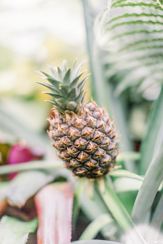 pineapple fruit in tilt shift lens