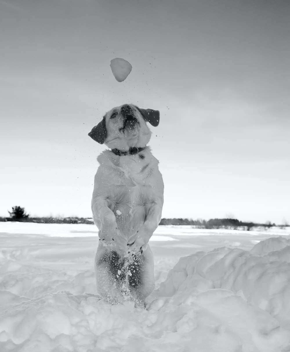 grayscale photo of dog on snow covered ground