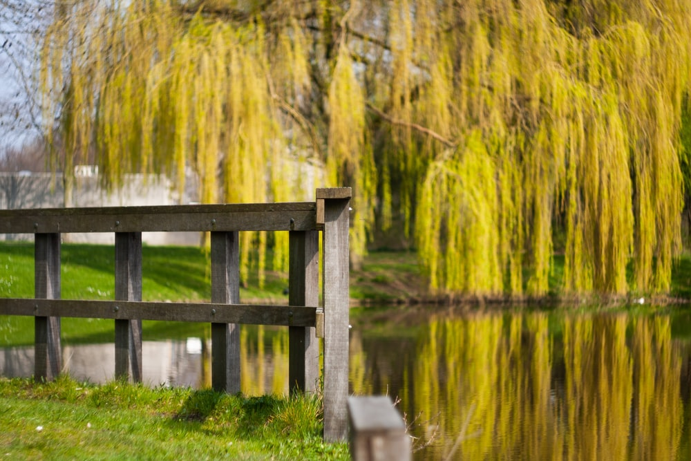 brown wooden bench on green grass near lake during daytime