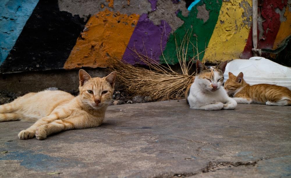 orange tabby cat lying on concrete floor
