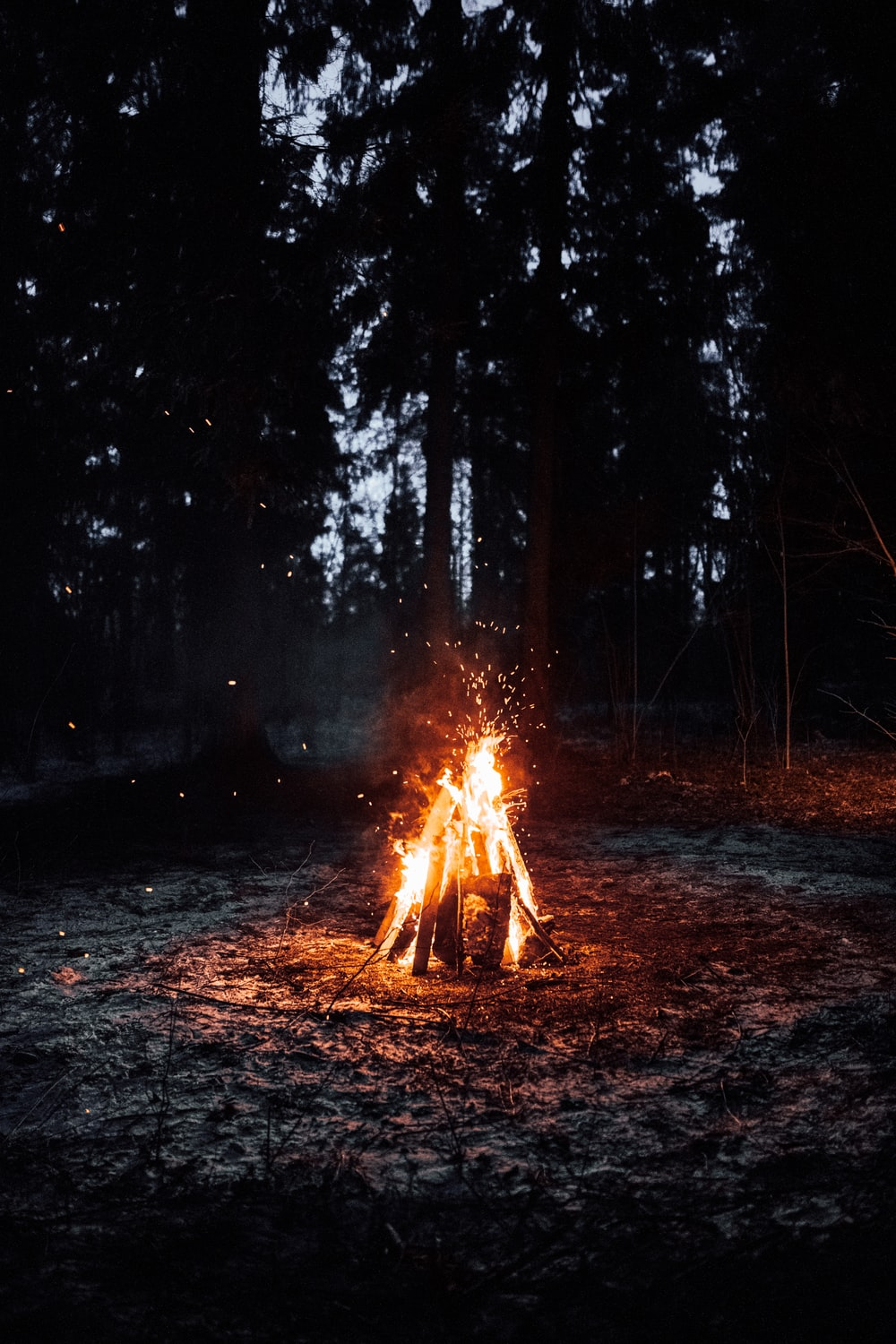 bonfire in forest during night time