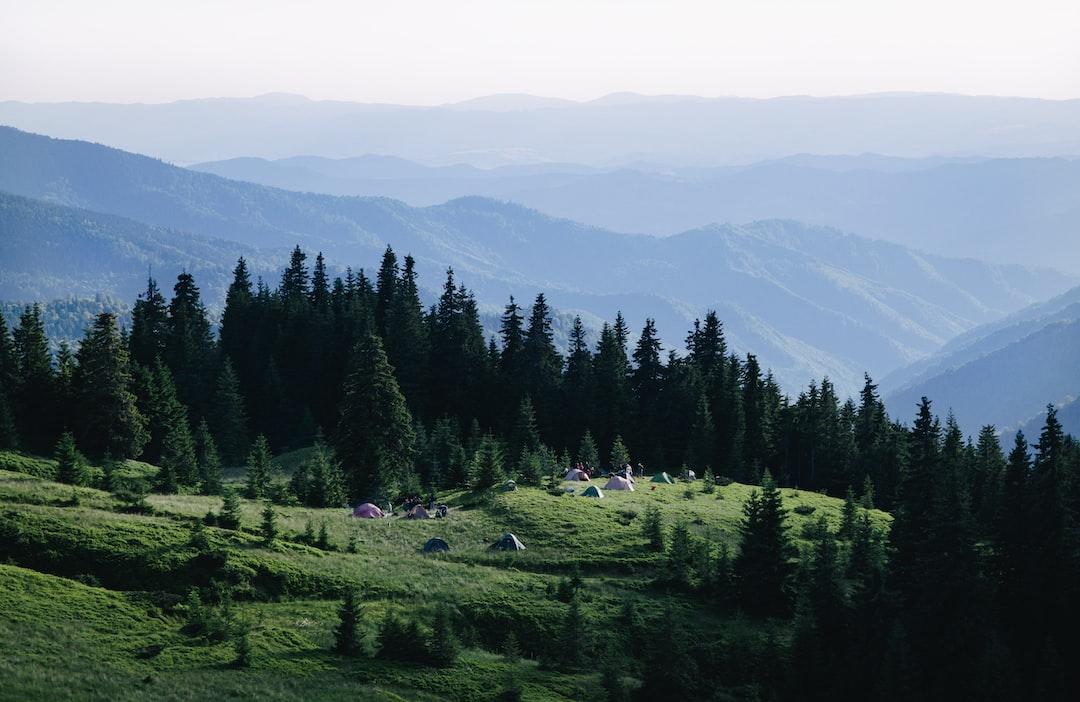 Fox mountain meadow